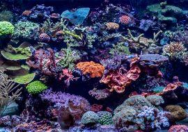 Marine aquarium care