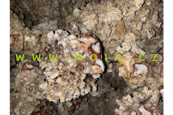 Stonecoral